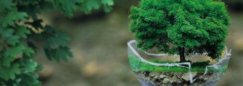 Intégrer le développement durable dans son cabinet...